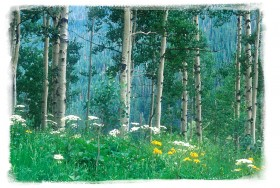 July 2001: Aspen Painting