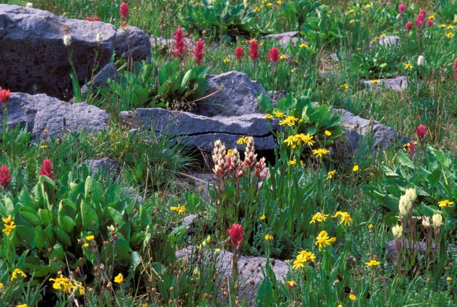 Wildflowers and Rock