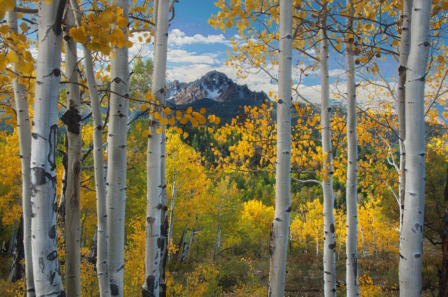 Through the Aspens to the Sneffles Range