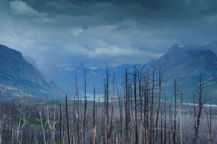 View of St. Mary's Lake and previous forest fire in Glacier National Park, MT