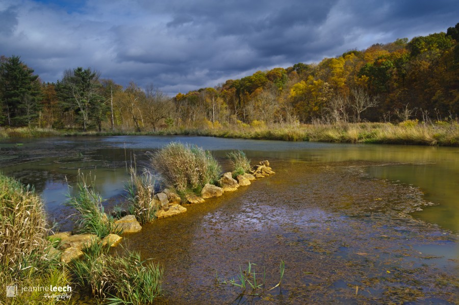 October 20, 2012: Wingfield Pines wetland in Upper St. Clair, PA