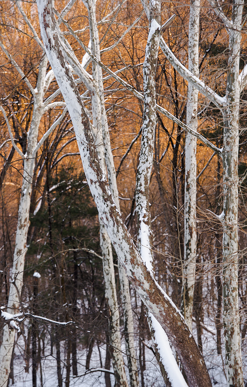 February 15, 2014: Winter at Mingo Creek County Park in Pennsylvania.